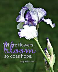where flowers bloom the week at a glance 5 25 an