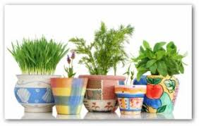tips for growing herbs indoors or outdoors