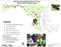 native plants maryland emerald ash borer