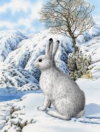 rabbit material 1605 best bunny images on drawings bunnies and
