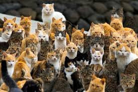 cats outnumber people on this mysterious u0027cat island u0027 the