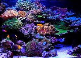 Marine Aquascaping Techniques Aesthetics Of Aquascaping Part Ii Reefs Com