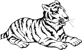baby tiger pictures to color free download