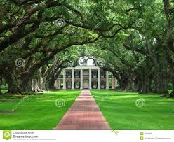 oak alley royalty free stock image image 5602896