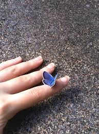 a blue butterfly landed on my meaxylon