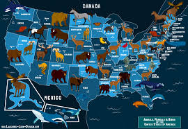 United States Of America Map by State Animals Of The U S A Map Jennifer Farley Illustration