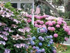 Top Flowering Shrubs - 14 flowering shrubs for sun hgtv