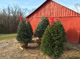 christmas trees hickory creek farm christmas trees
