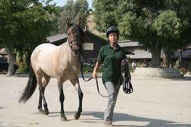 Radio Training Courses Horsemanship Radio Episode 36 By Index Fund Advisors Ifa Com