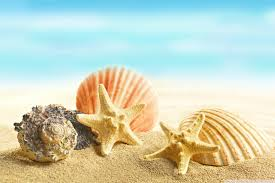 seashells and stars 4k hd desktop wallpaper for 4k ultra hd tv