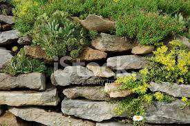 Rock Garden Cground Rock Garden With Ground Cover Stock Photos Freeimages