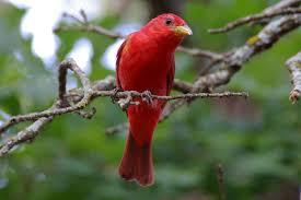 New Mexico birds images Audubon new mexico newsletters audubon new mexico jpg