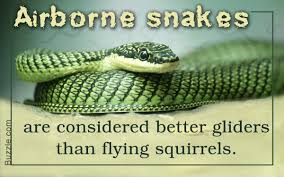 types of snakes with pictures you should totally bookmark this