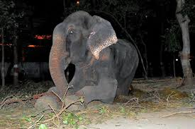 Blind Men And The Elephant Story For Children Cry Of Freedom Elephant Chained Up For 50 Years Is Rescued U0027and