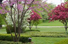 trees for landscaping crafts home