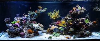 Aquascaping A Reef Tank Show Off Your Large Tank Aquascape Page 5 Reef2reef