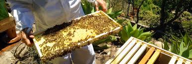 santa barbara beekeepers association