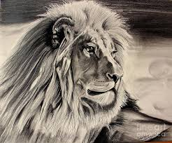 eye of the lion drawing by carolyn valcourt
