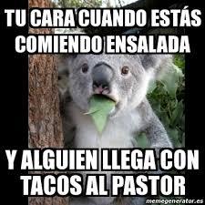 Tacos Al Pastor Meme - meme koala tu cara cuando estás comiendo ensalada y alguien llega