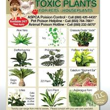 house plants safe for cats pin it house plants toxic to cats uk