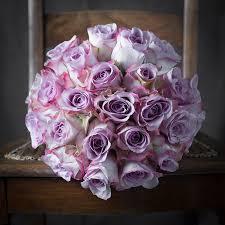 Lavender Roses Lavender Rose