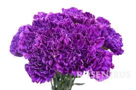 purple carnations wholesale moon series purple carnations moon shade 80 stems
