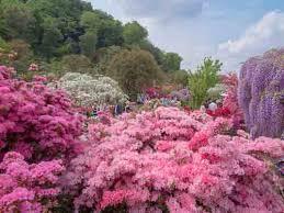 ashikaga flower park japanvisitor japan travel guide