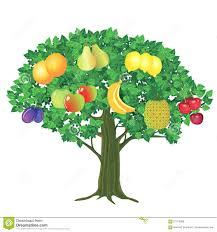 fruit tree stock vector illustration of plant bunch 57912358