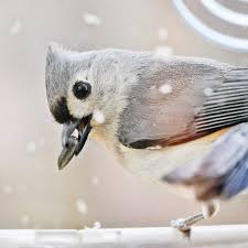 wild birds unlimited home facebook