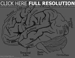 parts of the brain worksheet semnext