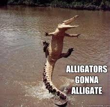 Alligator Meme - alligators gonna alligate memes