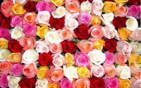 Rose Home Decor Color Roses Wallpaper Hd Download Of Beautiful Coloring Flowers