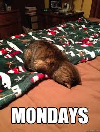 Mondays Meme - 12 funny monday memes that will brighten your monday