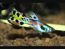 top 15 freshwater aquarium fish