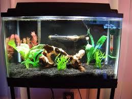 9 best fish tank things images on fish tanks aquarium