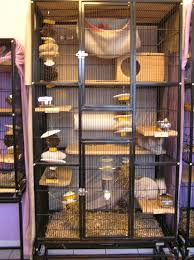 All Living Things Luxury Rat Pet Home by Great Rat Cage Idea Boy Do I Wish I Had A Bigger House So I