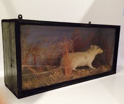 antique collectibles taxidermy u0026 specimens the uk u0027s premier