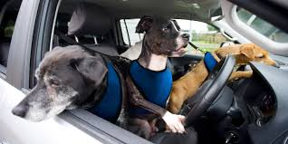Audi Q5 Dog Guard - the top 10 best cars for dogs and dog owners carwow