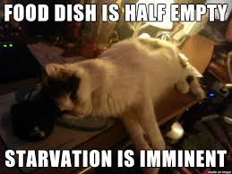 Depressed Cat Meme - cat won t make it through its 9 lives with a half empty bowl