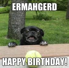 Birthday Animal Meme - happy birthday animal meme 1 birthday things pinterest