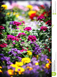 flower bed royalty free stock images image 894669