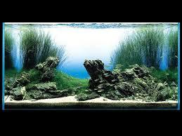 Aquascape Tank The Violet Fern Aquascaping