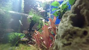 Decoration Of Fish Tank Footage Of The Interior Of A Fish Tank With Decorative Underwater
