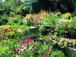 the 25 best wild flower gardens ideas on pinterest wild flower