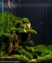 Java Moss Aquascape Java Moss Care Tips Moss Carpets U0026 Moss Trees Aquarium Info