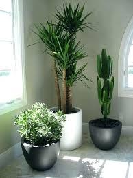 cactus home decor home decor plants artificial cactus flowers plants in pot home decor
