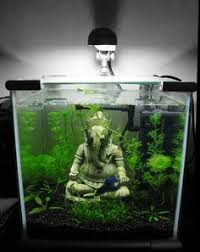 Nano Aquascaping Cool Aquarium Cool Pinterest Aquariums Fish Tanks And Fish