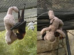 bat bear imgur