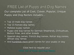 bichon frise names male sample list of cool popular unique puppy and dog names