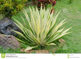 ornamental plants stock photo image 43157487